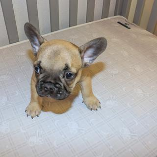 We love our mini mattress