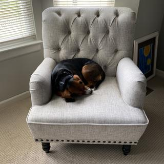 Love the chair and so does my dog! It's a sturdy, well made chair and was easy to put together.