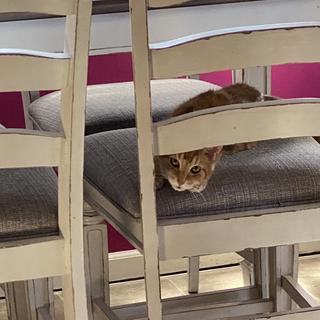 Even our cat loves the chairs can't find her just look under table on chairs she is just chilling!