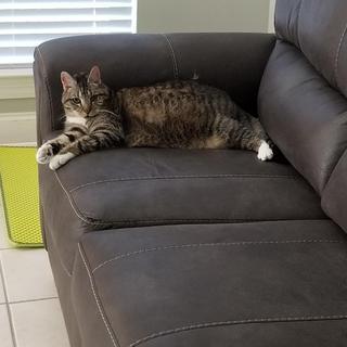 Kitty likes it too!!