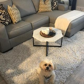 My pup is just as obsessed with the rug as I am!
