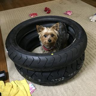 Tire guard dog