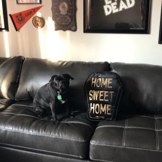Pizza loves the new couch