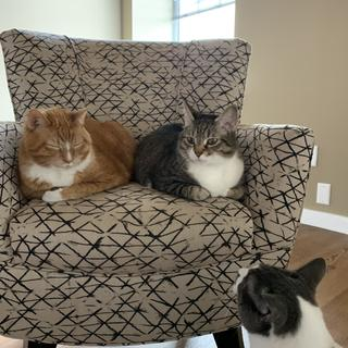 Is there room for 1 more? My cats are loving this chair!!! It's the perfect size for me as well!