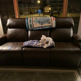 Even the dog loves our new sofa
