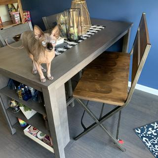 Our naked Sphynx Diamond @nocoatkitty is already in love with our dining set!!!??