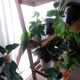 House plant oasis