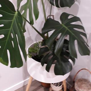 Houseplant planter