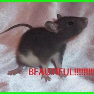 This rat describes my feelings toewards the squirms