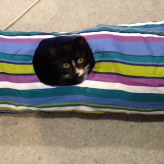 Chase loves her tunnel and has lots of fun running through it or popping out the top. Great buy