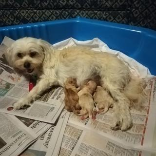 We used it as a puppy pen for our wee dog to give birth and care for her pups in.  Perfect!
