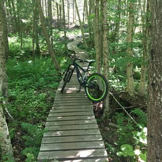 kingdom trails. trillium
