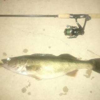 Results speak for themselves. 24 inch walleye.