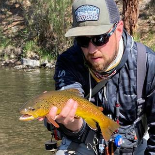 Brown Trout on the South Platte, Colorado