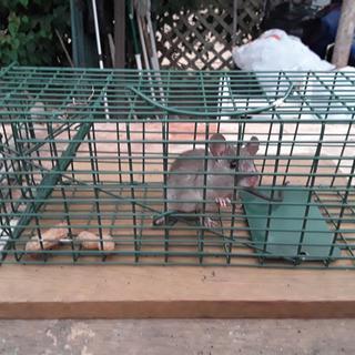 Me 1 Rat 0 V2