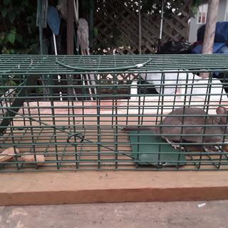 Me 1 Rat 0