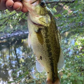 Nice largemouth. They were in a pair and I got both to hit it