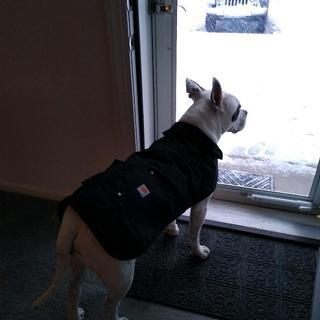 Carhartt chore coat for Petey!
