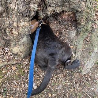 Clearing a tree of squirrel threats!