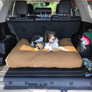 Mabel in her Truck!