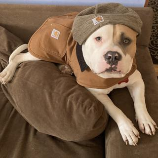 Bugsy ready for the cold weather work!