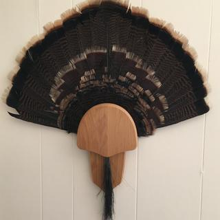The fan & beard from a Spring Tom, mounted on a Walnut Hollow Country kit.