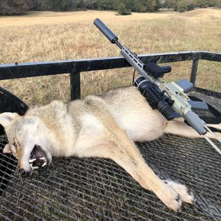 Eradicated this coyote at 100yds with the Honey Badger 300 BlackOut, Barnes Vor-TX 110 gr, DRT