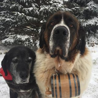Moose with his new barrel and older brother.