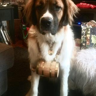 Bowe looks handsome wearing  his barrel collar on Christmas Day 2018.