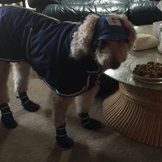 Sam in his new coat