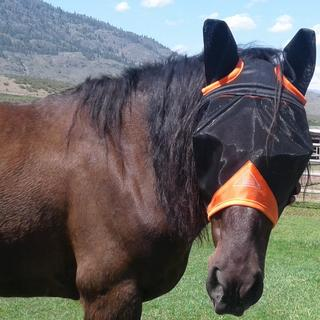Pacha loves his new fly mask.