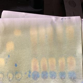 Shows lactic acid, no Malic, but wine still undergoing ml ( bubbles)