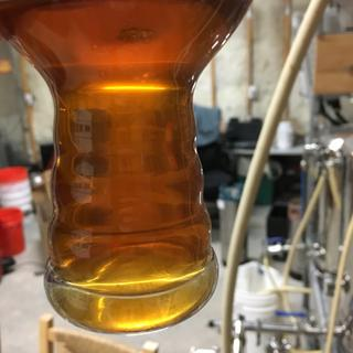 Bohemian Pilsner after about 3 months. Super clear