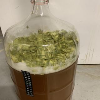 Excellent whole cone hops!  Currently using these whole cone Cascade hop to dry hop my beer!
