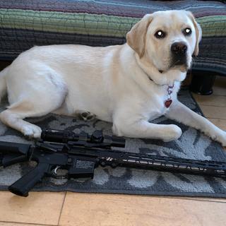 Sorry I had to ad my big dog Mikado!
