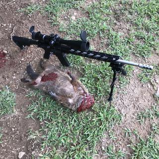 Great ground hog gun