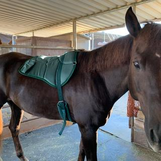 Jack looking handsome with his new bareback pad...super duper comfy too!