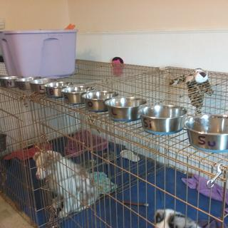 Only Durapet bowls used at Shanti Australian Shepherds for 20 years!