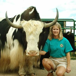Lynda at High Country Critters with our Yak bull Sherpa
