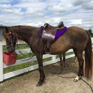 My Rocky Mountain mare loves the fit! so do I