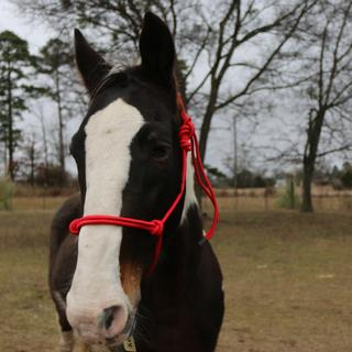 Tux in his new red halter