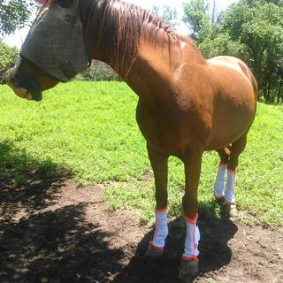 Horse size, on a ~15 hand gelding