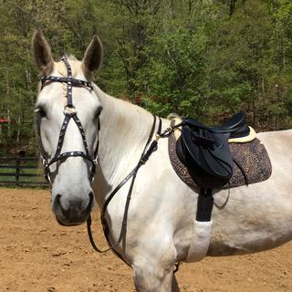The oversize fit my draft mare perfectly! Love it!