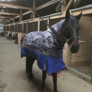 Great heavy blanket!  Fits my 16 h Quarter Horse well.