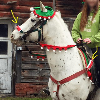 Holiday Horse Halter Bridle Accessory Set - On horse