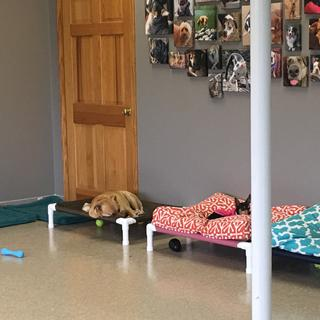 We all like our own beds (one is a 4 pound chihuahua).