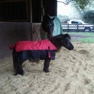 Minnie in her new raincoat!