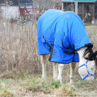 Grazing in the cold! I LOVE MY BLANKET, I TRUELY DO!