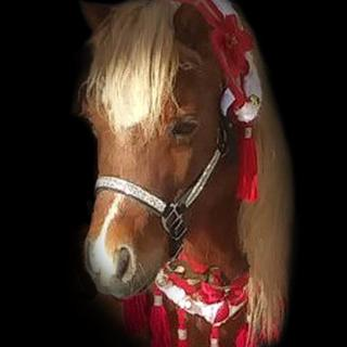 Dixie in her Christmas costume while visiting a local rest home