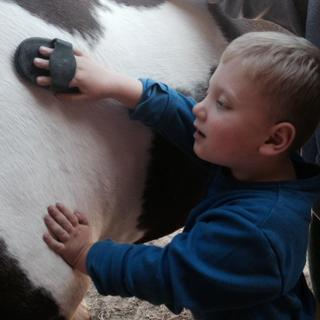 George grooming his horse